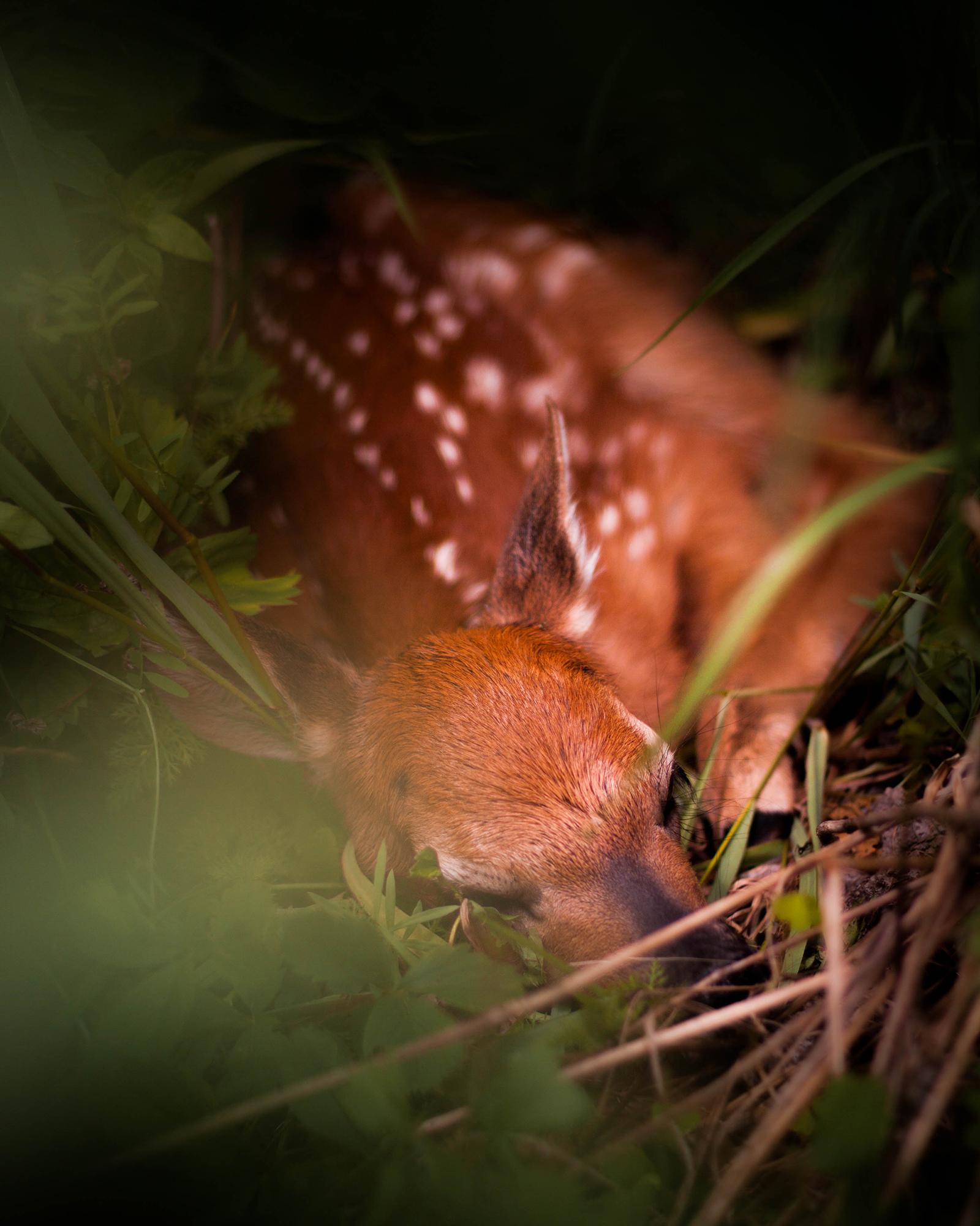Deer Babe