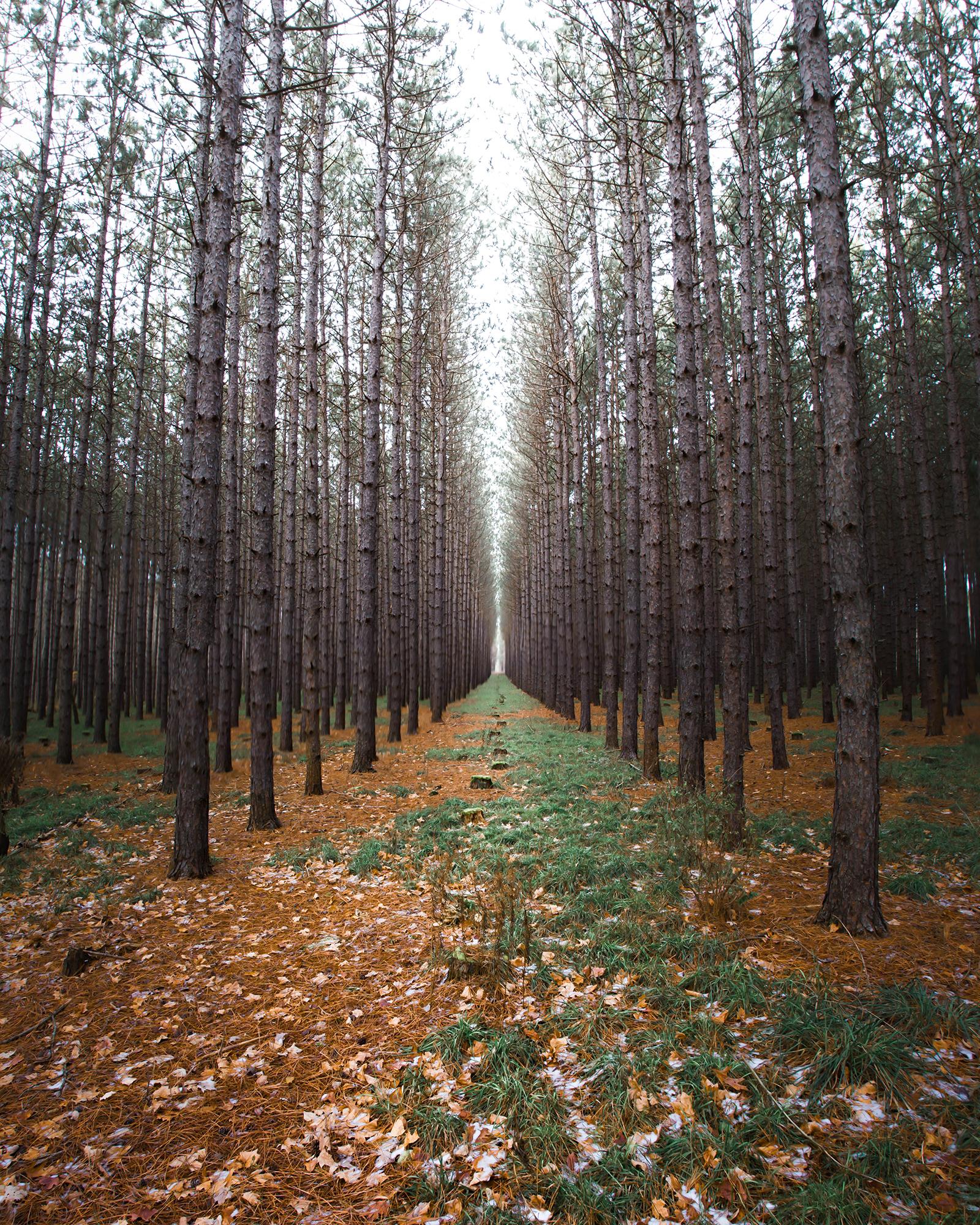 Yet Another Tree Farm Photo